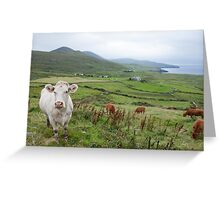 A Cow in Kerry Greeting Card