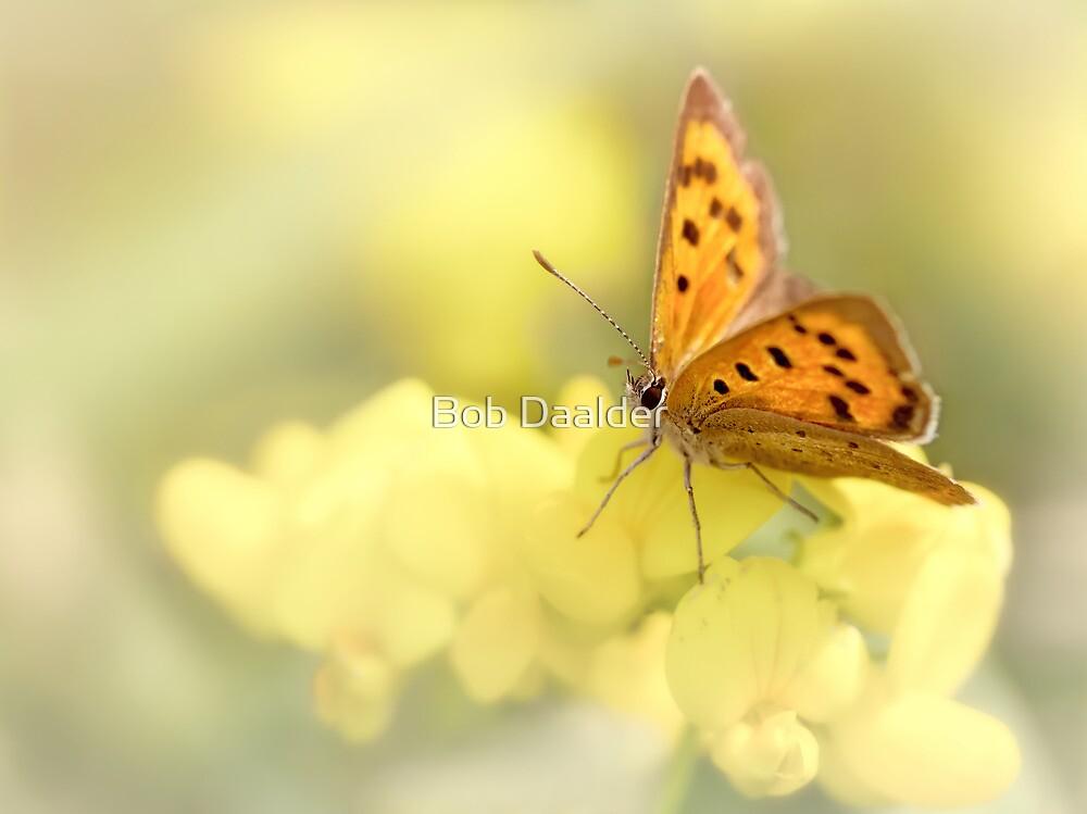 Precious Summer Gold by Bob Daalder