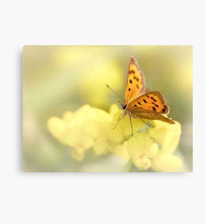 Precious Summer Gold Canvas Print