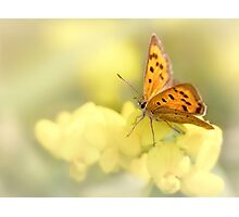 Precious Summer Gold Photographic Print
