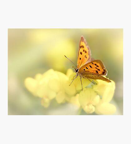 Precious Summer Gold Photographic Print
