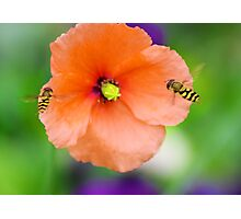Wasps attack flower Photographic Print