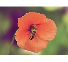 Vintage photo of wasps attacking flower Photographic Print