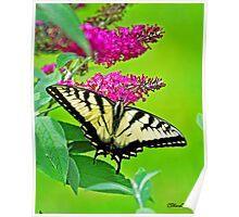 Butterfly in Bradford II Poster