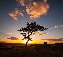 Dog Rocks Tree 2 by Danielle  Miner