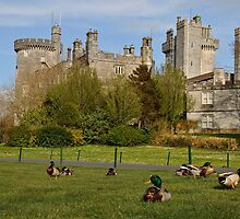 Dromoland Castle Duck walk! by Noel Moore Up The Banner Photography