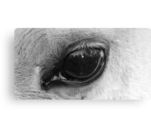 Eye of the wise Canvas Print