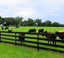 Field of Cattle by AuntDot