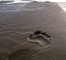 Foot step in the sand by Revd Andy Barton