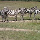 Zebra Crossing by Bethan  Howells