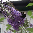 big bumblebee by chelblack