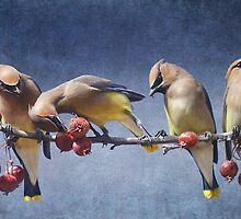 row of waxwings with crabapple fruit by R Christopher  Vest