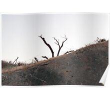 Peeking Tree Poster
