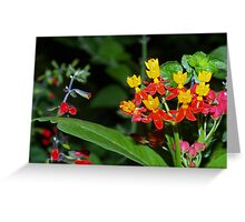 Bright combo Greeting Card