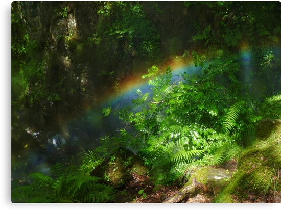 Rainbow in the Forest by hoppityhops