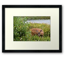 Can You See Me Now???? Framed Print