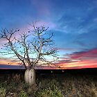 Boab Sunset @ Derby WA by Mark Ingram