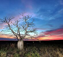Boab Sunset @ Derby WA by Mark Ingram