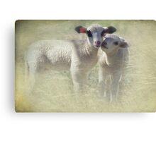 Lamb Twins Canvas Print
