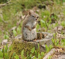 Feisty Squirrel by jlc73