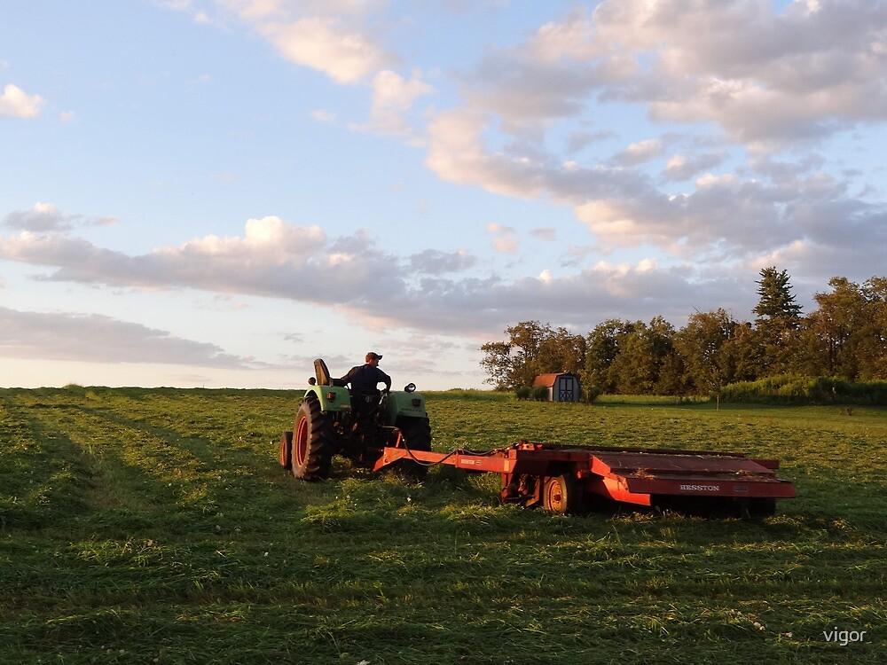 Make hay while the sun shines by vigor