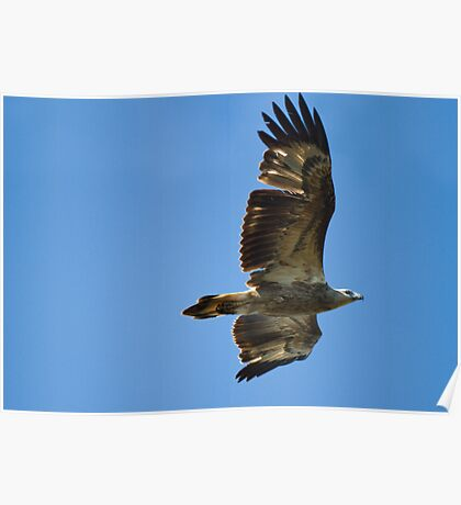 Spirit Bird Poster