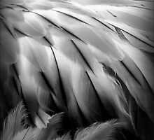 Flamingos Dream in Black and White by paintingsheep