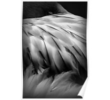 Flamingos Dream in Black and White Poster