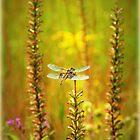 Dragonfly Splendor by TrendleEllwood