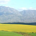 Canola in the Overberg by MaanKind