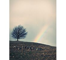 Chasing rainbows and counting sheep. Same thing really. Photographic Print