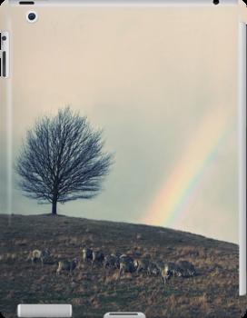 Chasing rainbows and counting sheep. Same thing really. by John Medbury (LAZY J Studios)