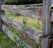 Stockyard fence. by Ian Ramsay
