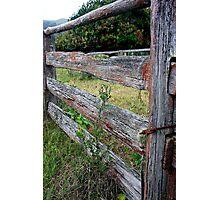 Stockyard fence. Photographic Print