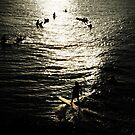 west java surf 4 by wellman
