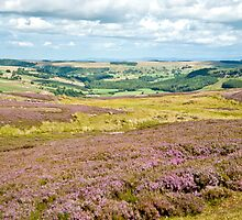 Landscape of Heather by Sue Knowles