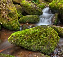 Moss Covered Rock by Alex Banakas