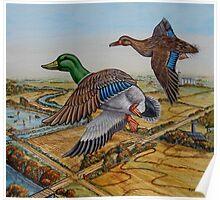 Mallards Over The Prairie Poster