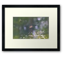 Red Dragon Fly in flight Framed Print