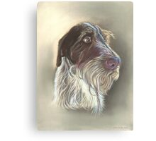 German Wire haired Pointer Canvas Print