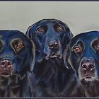 the Pennington Labradors by Jane Smith