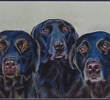 the Pennington Labradors by Jane Smith