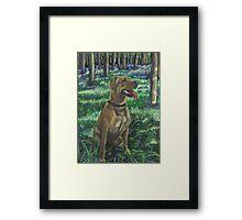 Tilly in the Bluebells Framed Print