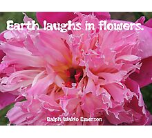Pink Gaiety Photographic Print