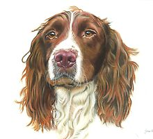 English Springer Spaniel by Jane Smith