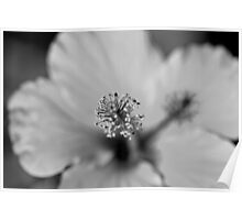 Hibiscus Flower Macro Photography Poster