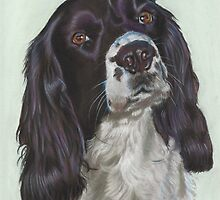 Black and white Springer by Jane Smith