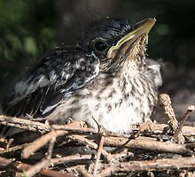 Mockingbird Baby by KAREN SCHMIDT