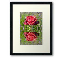 Red Rose reflection Framed Print