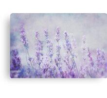 lavender romance Canvas Print